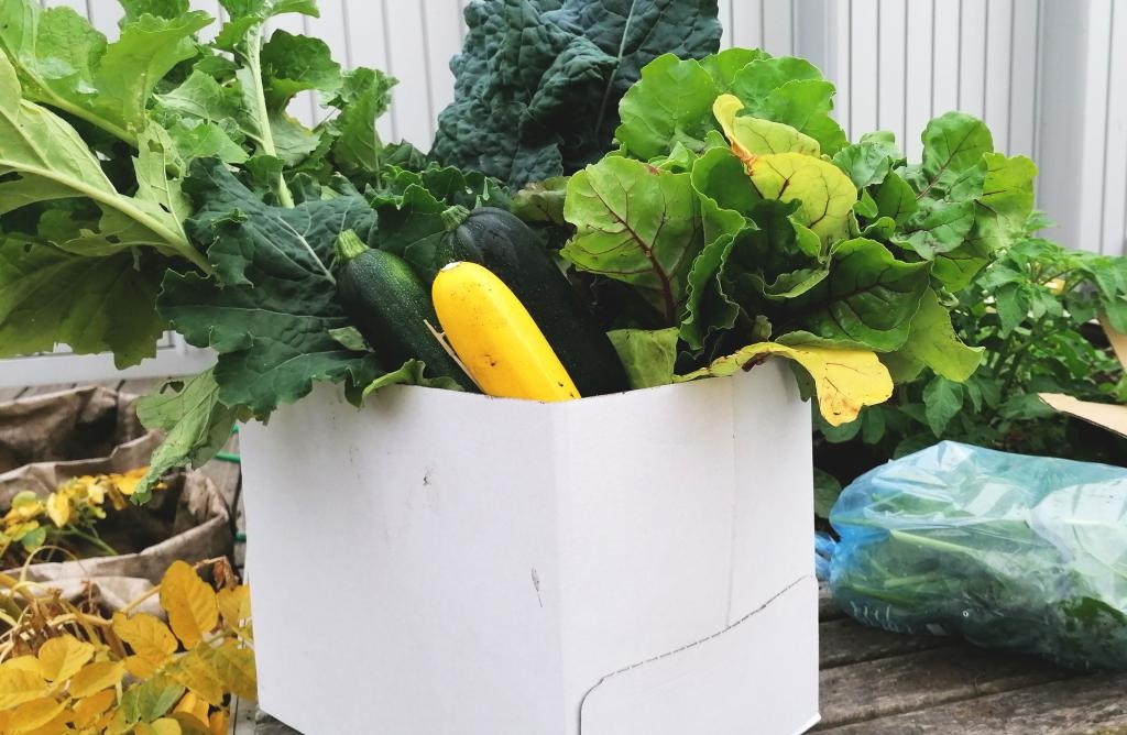 Photo showing veg box ready for An Clachan Cafe. Grown in garden on fourth floor of college