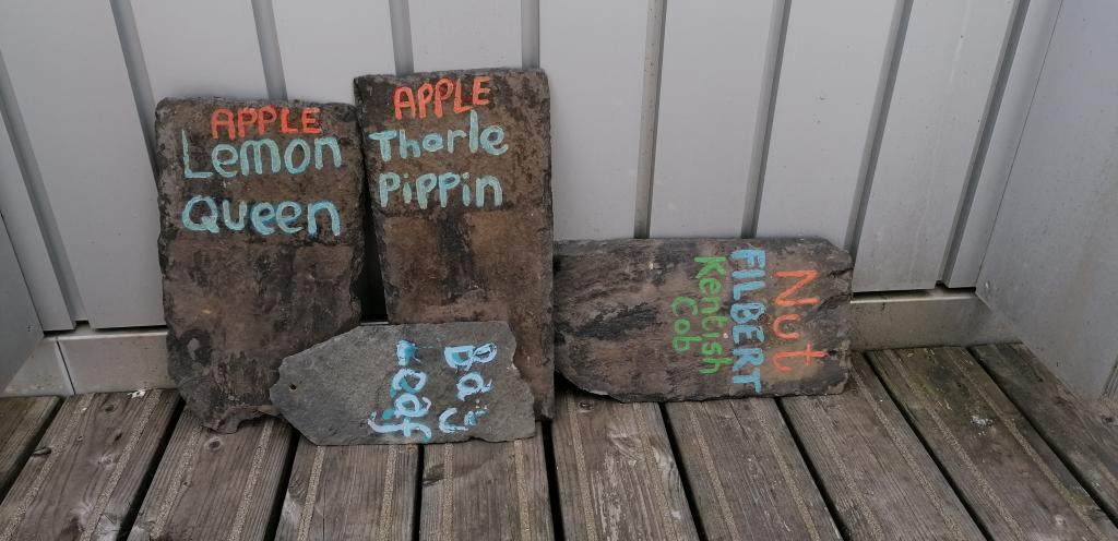 Photo showing signs made by students for trees growing in 7th floor garden